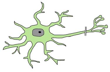 Stem Cell Illustration